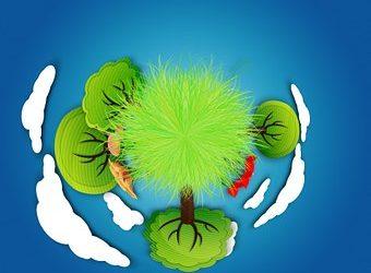 Dia mundial de l'educació ambiental i Dia mundial de la reducció de les emissions de CO2