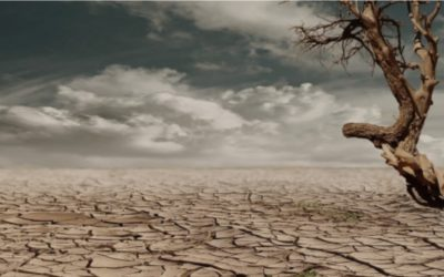 Jornada Emergència Climàtica i Migracions – 14 de novembre de 2019